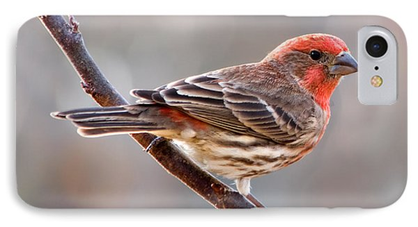 House Finch IPhone 7 Case by Betty LaRue