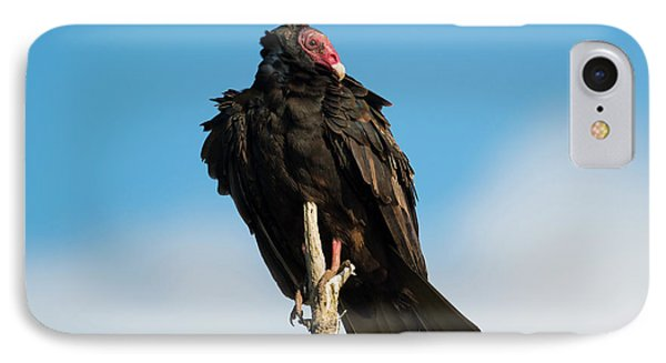 Looking For A Meal IPhone Case by Mike Dawson