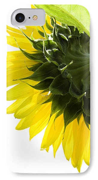 Sunflower IPhone Case by Fran Gallogly