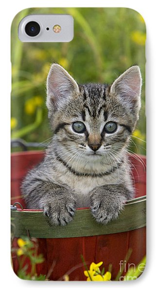 Tabby Kitten IPhone Case by Jean-Louis Klein & Marie-Luce Hubert