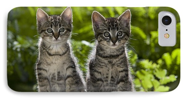 Tabby Kittens IPhone Case by Jean-Louis Klein & Marie-Luce Hubert