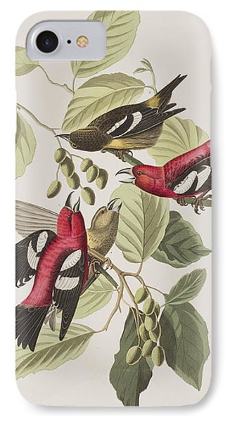 White-winged Crossbill IPhone Case by John James Audubon