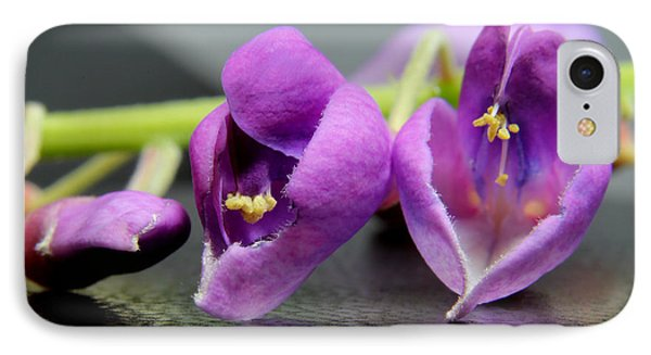 2010 Wisteria Blossom Up Close 1 Phone Case by Robert Morin