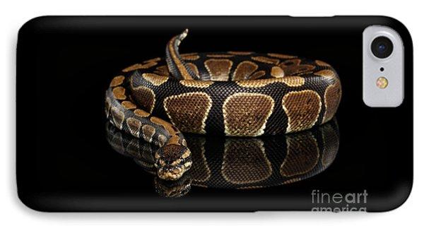 Ball Or Royal Python Snake On Isolated Black Background IPhone Case by Sergey Taran