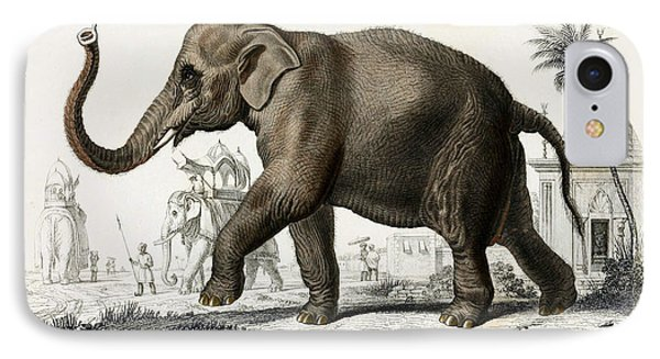 Indian Elephant, Endangered Species IPhone Case by Biodiversity Heritage Library