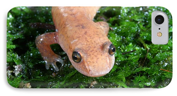 Spring Salamander IPhone Case by Ted Kinsman