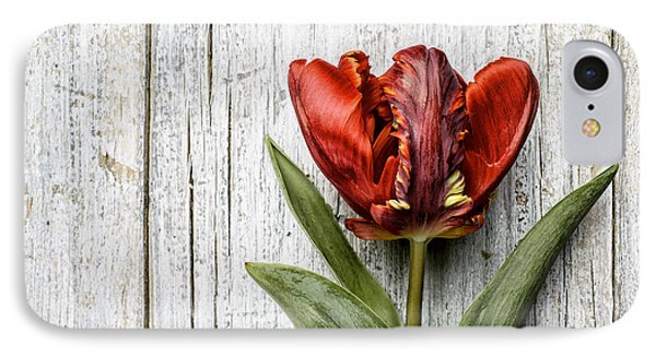 Tulip IPhone Case by Nailia Schwarz