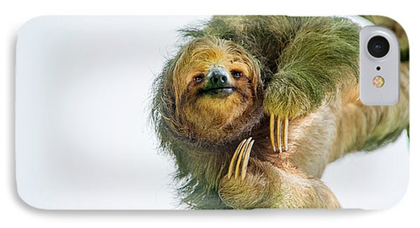 Three-toed Sloth Bradypus Tridactylus IPhone Case by Panoramic Images