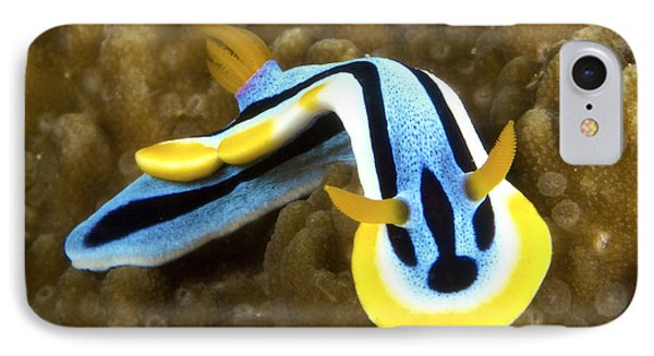 Nudibranch Feeding On Algae, Papua New Phone Case by Terry Moore