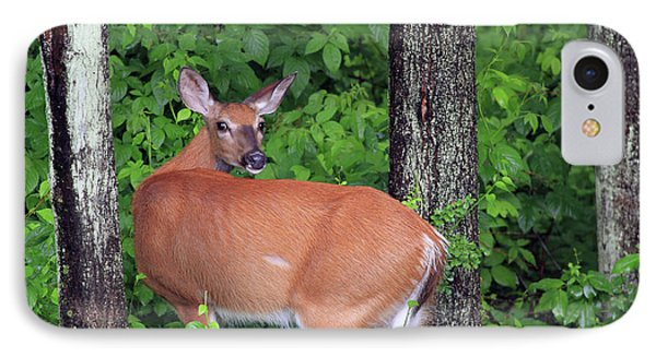 A Doe Within The Trees Phone Case by Karol Livote