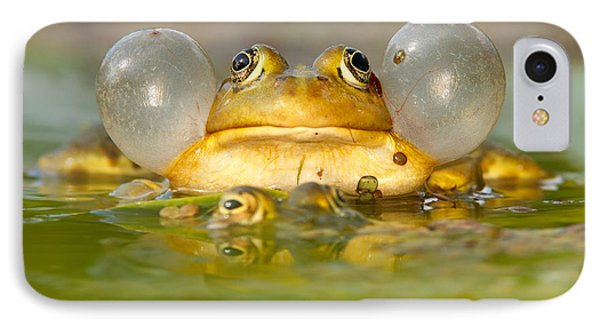 A Frog's Life IPhone Case by Roeselien Raimond