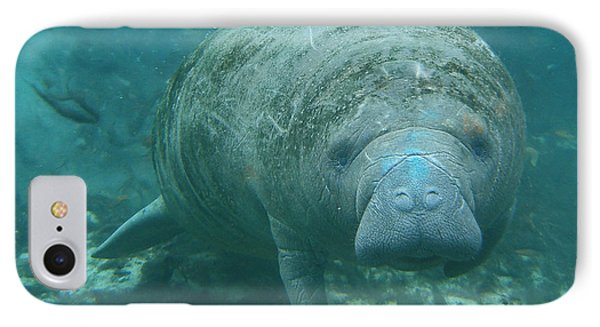 About To Meet A Manatee Phone Case by Kimberly Mohlenhoff