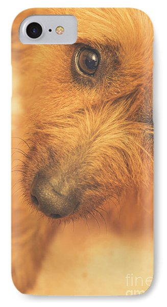 Adorable Small Pet Dog In Tones Of Red IPhone Case by Jorgo Photography - Wall Art Gallery