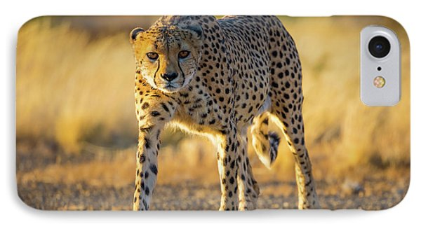 African Cheetah IPhone 7 Case by Inge Johnsson