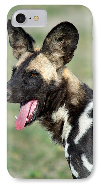 African Wild Dog Lycaon Pictus, Tanzania IPhone Case by Panoramic Images