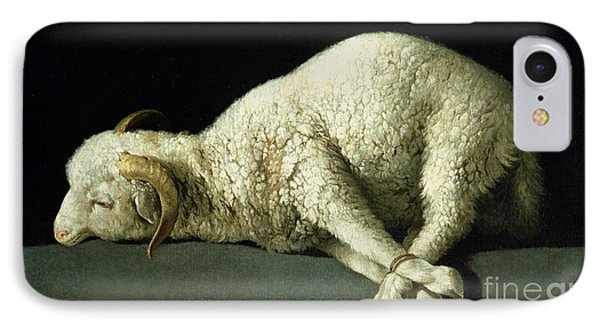 Agnus Dei IPhone Case by Francisco de Zurbaran