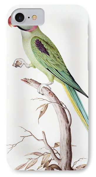 Alexandrine Parakeet IPhone Case by Nicolas Robert