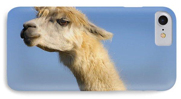 Alpaca IPhone Case by Skip Hunt