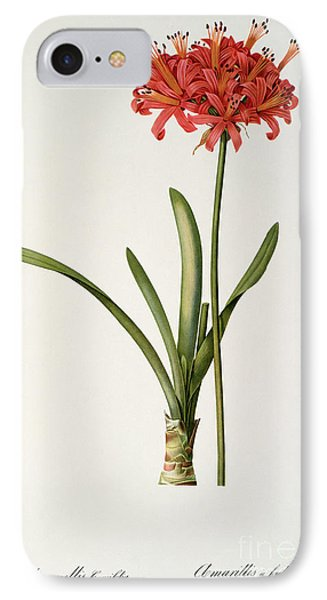 Amaryllis Curvifolia IPhone Case by Pierre Redoute