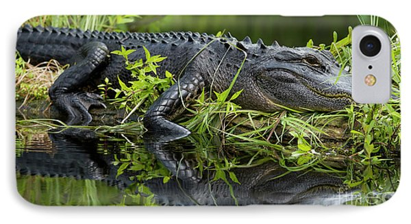 American Alligator In The Wild IPhone 7 Case by Dustin K Ryan