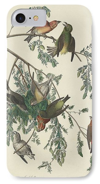 American Crossbill IPhone Case by John James Audubon