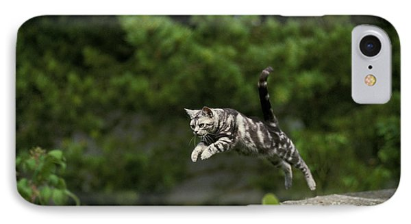 American Shorthair, Leaping IPhone Case by Gerard Lacz
