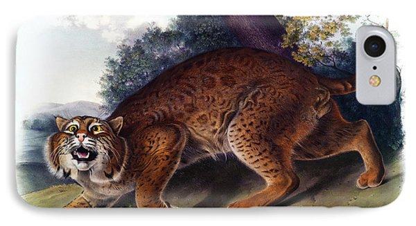 American Wild Cat Antique Print Audubon Quadrupeds Of North America Plate 1 IPhone Case by John Audubon
