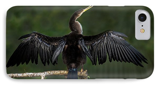 Anhinga Anhinga Anhinga Perching IPhone Case by Panoramic Images