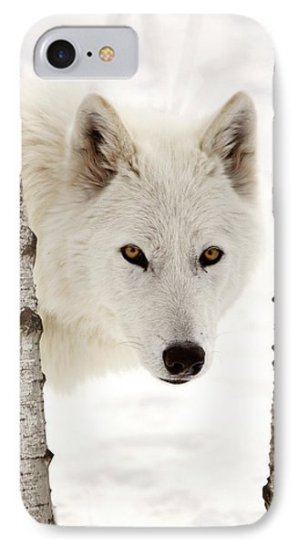Arctic Wolf Seen Between Two Trees In Winter IPhone Case by Mark Duffy