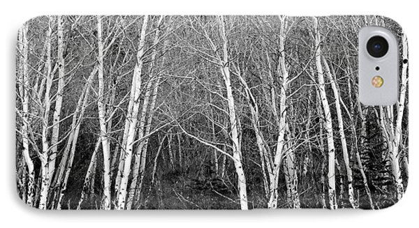 Aspen Forest Black And White Print Phone Case by James BO  Insogna