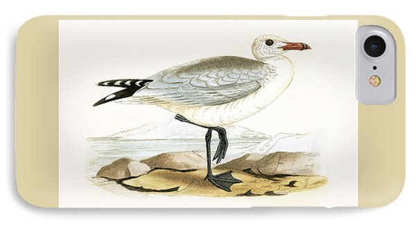 Audouin's Gull IPhone Case by English School