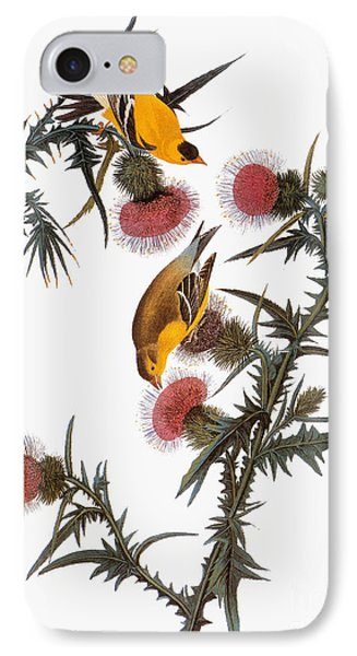 Audubon: Goldfinch IPhone Case by Granger
