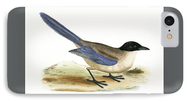 Azure Winged Magpie IPhone Case by English School