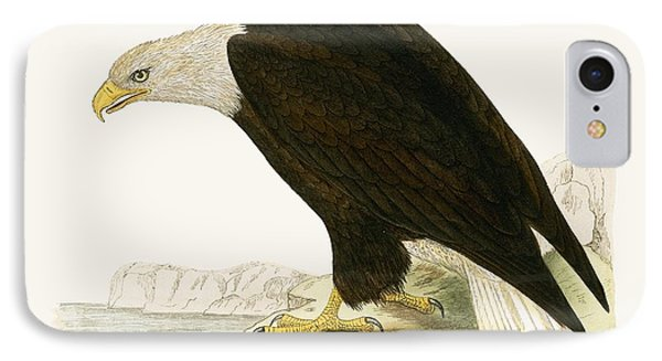Bald Eagle IPhone Case by English School