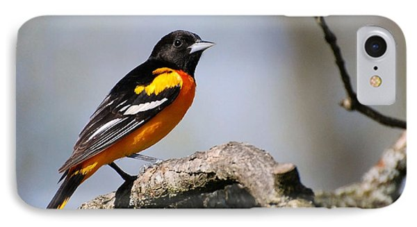 Baltimore Oriole IPhone 7 Case by Christina Rollo