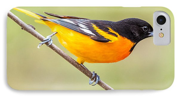Baltimore Oriole IPhone Case by Paul Freidlund