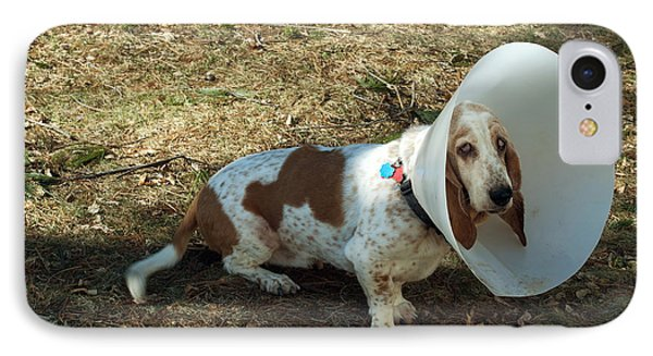 Basset Hound With Elizabethan Collar IPhone Case by John Kaprielian