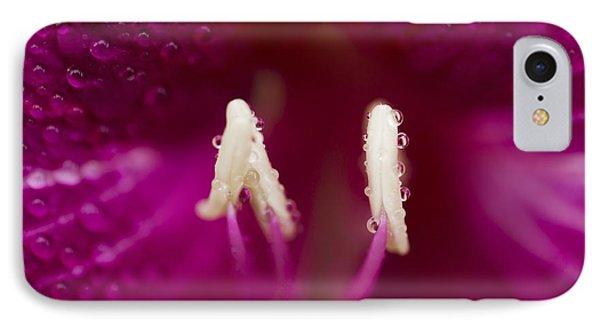 Bauhinia Blakeana Hawaiian Orchid Tree Floral Macro IPhone Case by Sharon Mau
