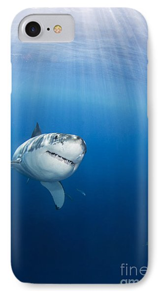 Beautiful Great White IPhone Case by Dave Fleetham - Printscapes