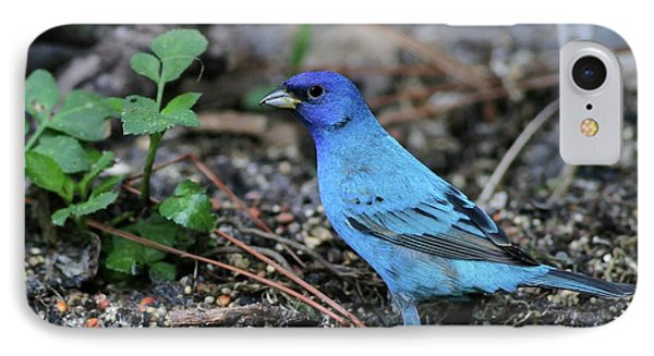 Beautiful Indigo Bunting IPhone Case by Sabrina L Ryan