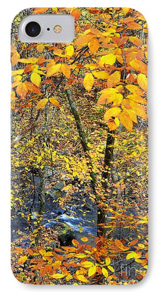 Beech Leaves Birch River Phone Case by Thomas R Fletcher
