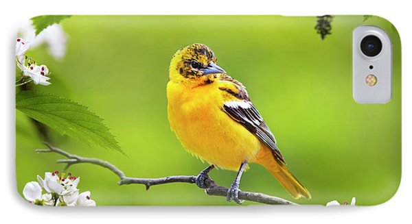 Bird And Blooms - Baltimore Oriole IPhone 7 Case by Christina Rollo