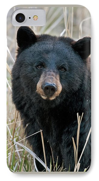 Black Bear Closeup IPhone Case by Gary Langley