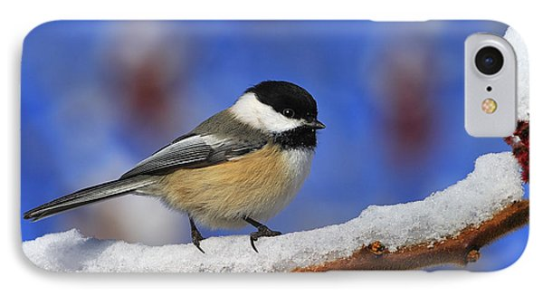 Black-capped Chickadee In Sumac IPhone Case by Tony Beck