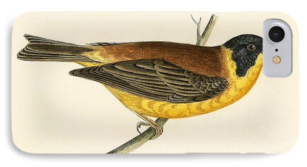 Black Headed Bunting IPhone 7 Case by English School