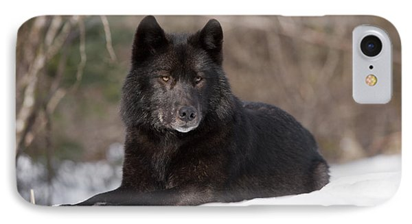 Black Wolf Phone Case by John Hyde - Printscapes