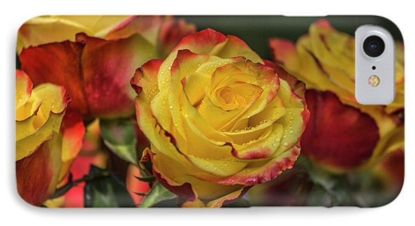 Oh My God It's Another  Rose Image IPhone Case by Betsy Knapp
