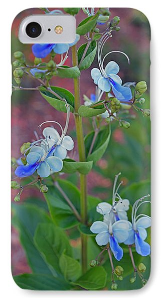 Blue Butterfly Bush IPhone Case by Aimee L Maher Photography and Art Visit ALMGallerydotcom