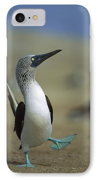 Blue-footed Booby Sula Nebouxii IPhone Case by Tui De Roy