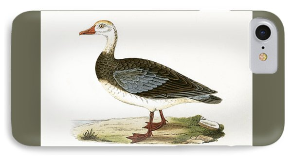Blue Winged Goose IPhone Case by English School